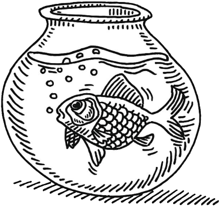A gold fish has an attention span of 9 seconds.